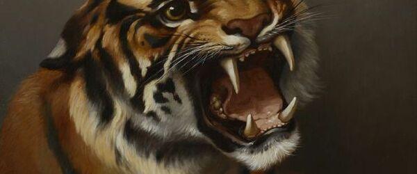 Portret van tijger Atyr